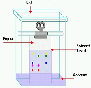 Chromatography Paper structure